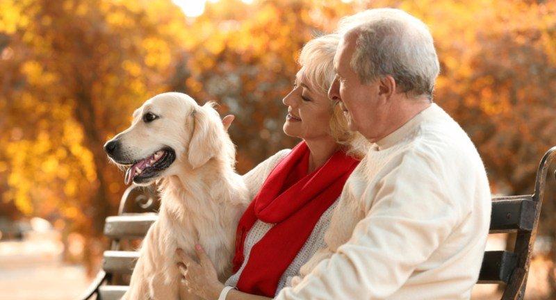 Haustiere für Senioren – lohnt sich das und was wählt man am besten aus?